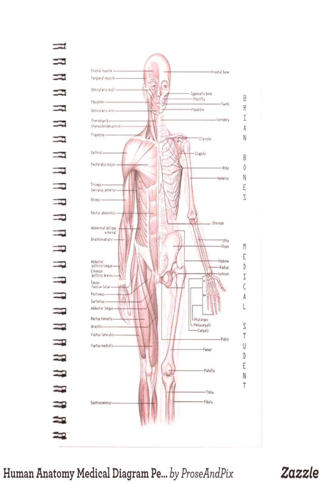NEW Human Anatomy Medical Diagram Personalized Sc