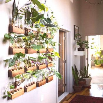 The Plant Doctor's home tour is definitely full of plants and tons of unique ideas for dis