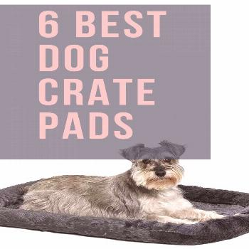 6 Best Crate Dog Beds Dog crates are great for home or travel, but they are usually made from hard