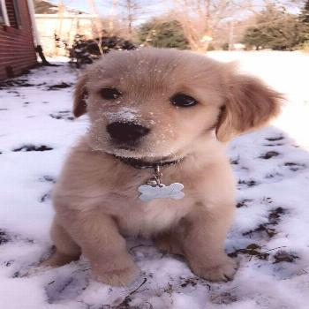 60 Photos For Anyone Who's Just Having A Bad Day   FallinPets  - Cute dogs -