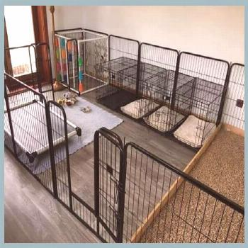 Choosing The Best Pet Boarding Facility | Dog Boarding Facility Ideas | Dog Boarding Facility... 7