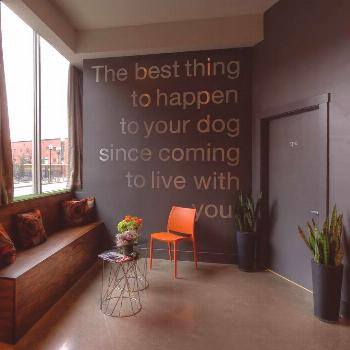 Choosing the Right Dog Boarding Facility for Your Pet – Dog boarding facility Dog boarding fa