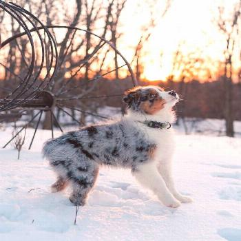 kodiaktheaussie - Tap the pin for the most adorable pawtastic fur baby apparel Youll love the dog c