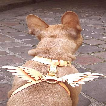 NIELS PEERAER – Wings leather dog harness – Tap the pin for the most adorable pawtastic fur b..
