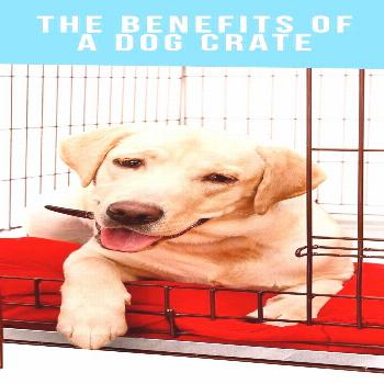 The Benefits of a Dog Crate The Benefits Of A Dog Crate