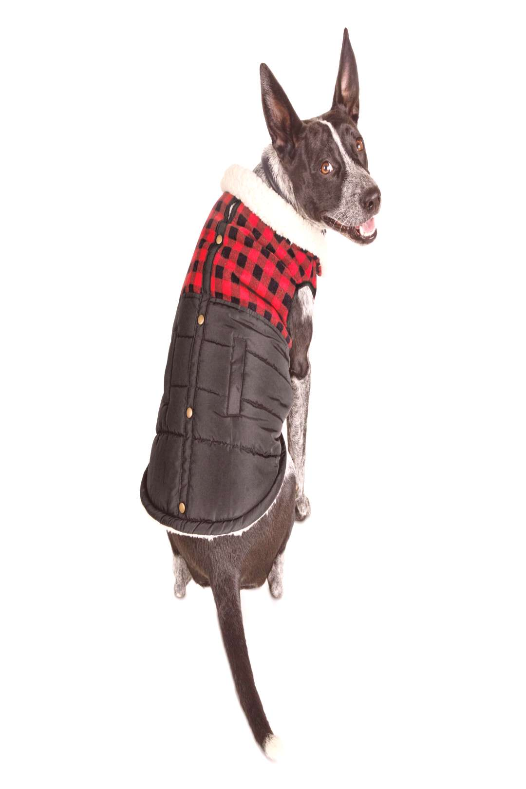 Bond & Co. Faux-Shearling-Lined Buffalo Check Flannel Dog Coat | Petco