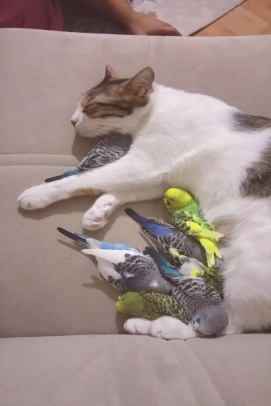 Cats and birds taking a nap. Cats and Birds on Our Pinterest Dog Boards. Why Not? I Imagine All of
