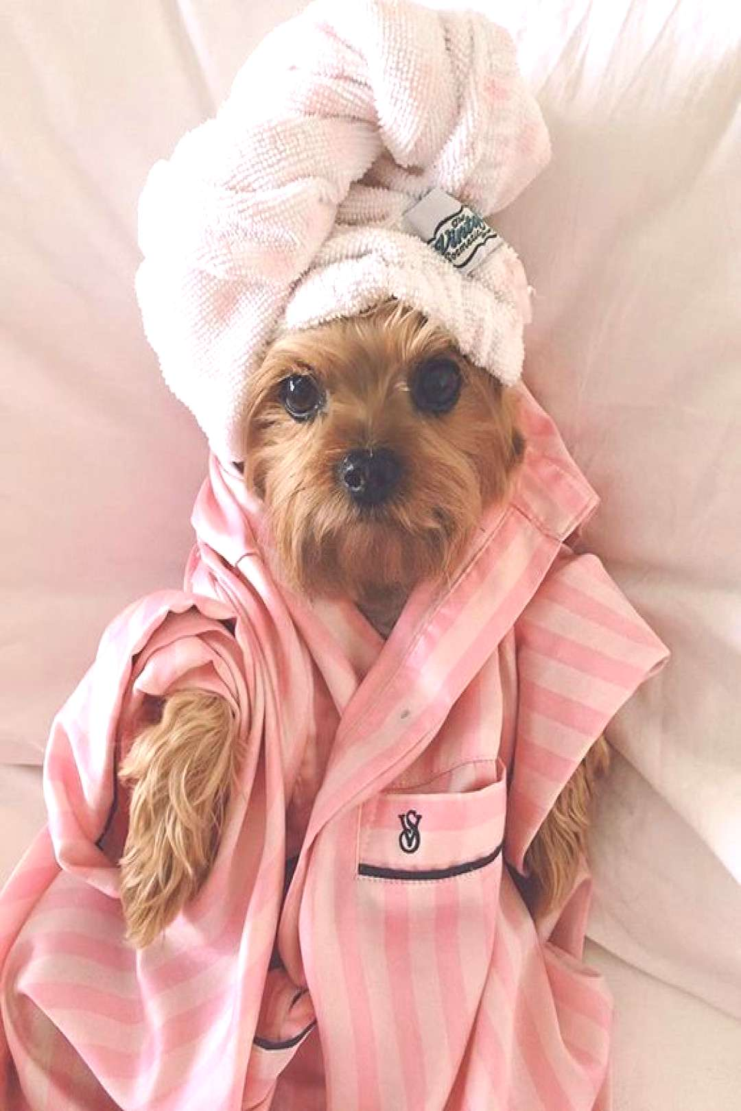 Chiens 101: shampooing pour chien -