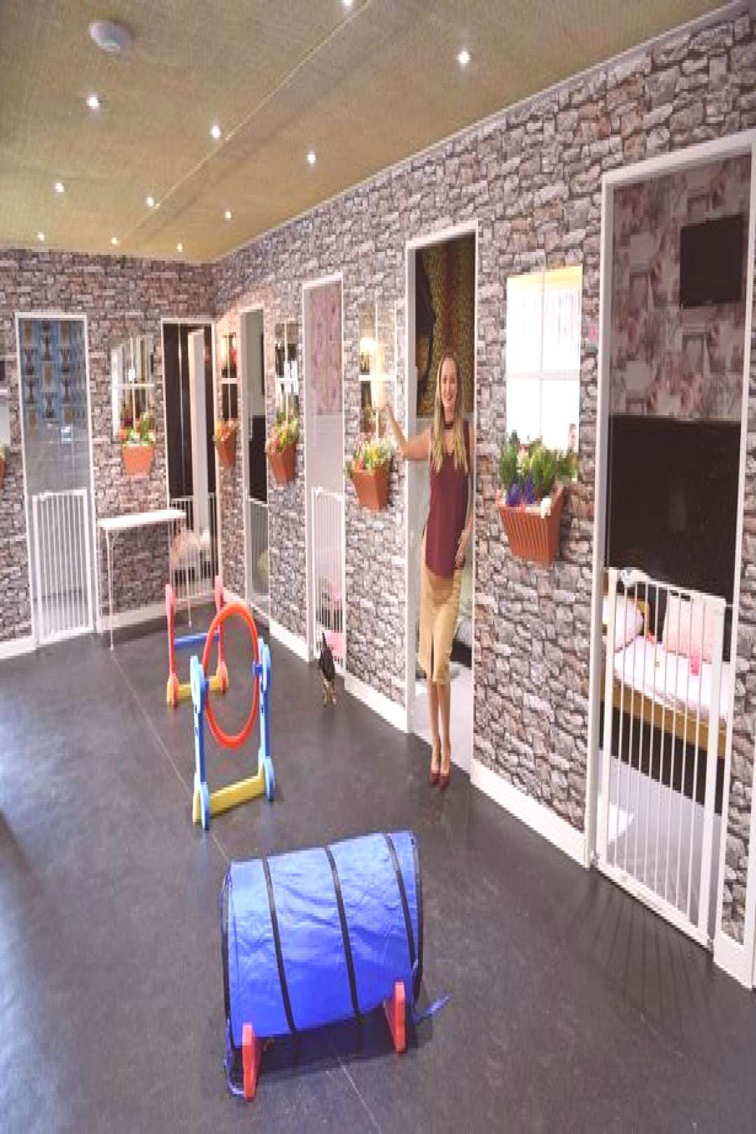 First look inside luxury dog hotel with HDTVs in every bedroom - Liverpool Echo