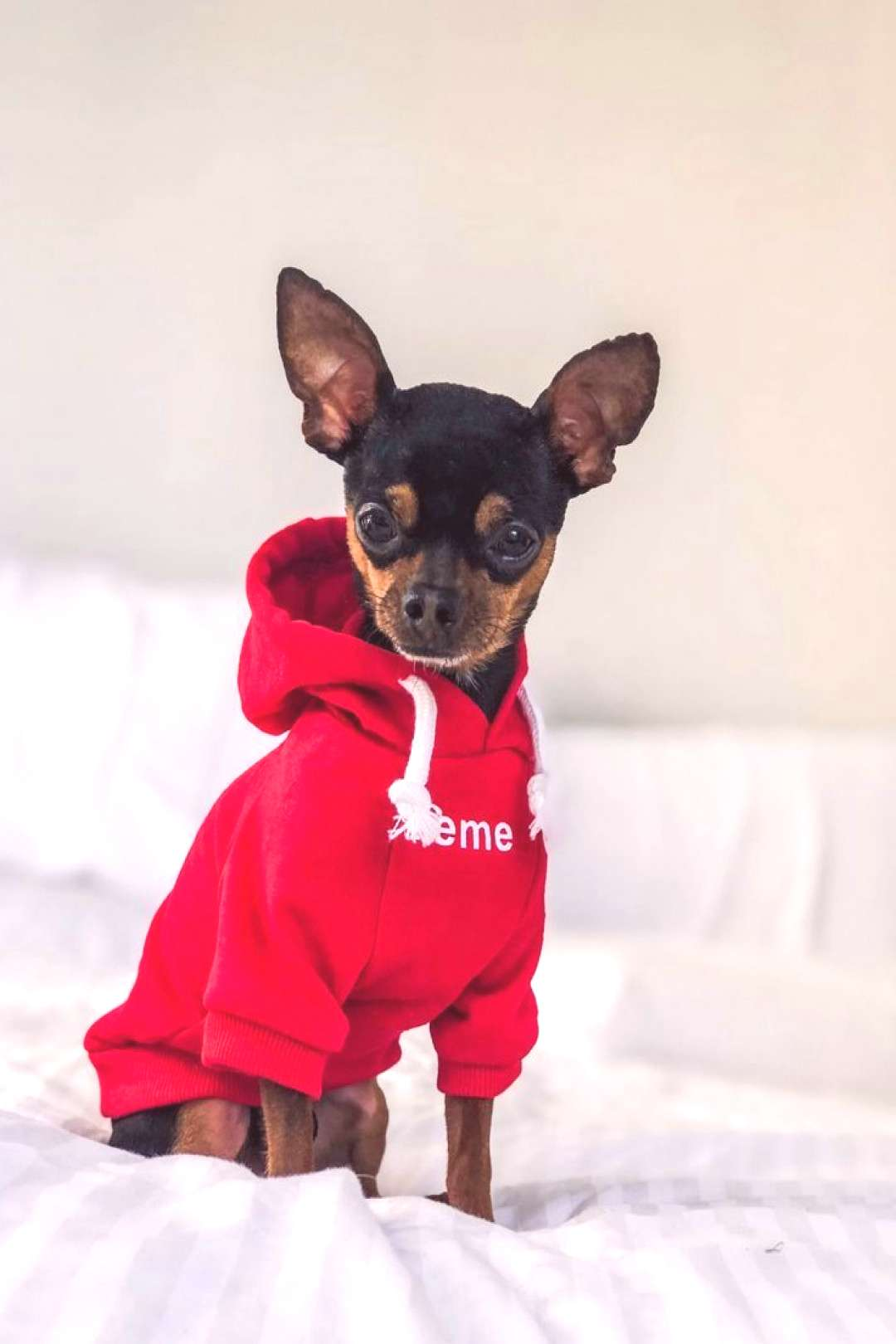 Furbaby Couture - Pet Boutique | Premium Dog Apparel and Fashion We are giving away the first 50 ca