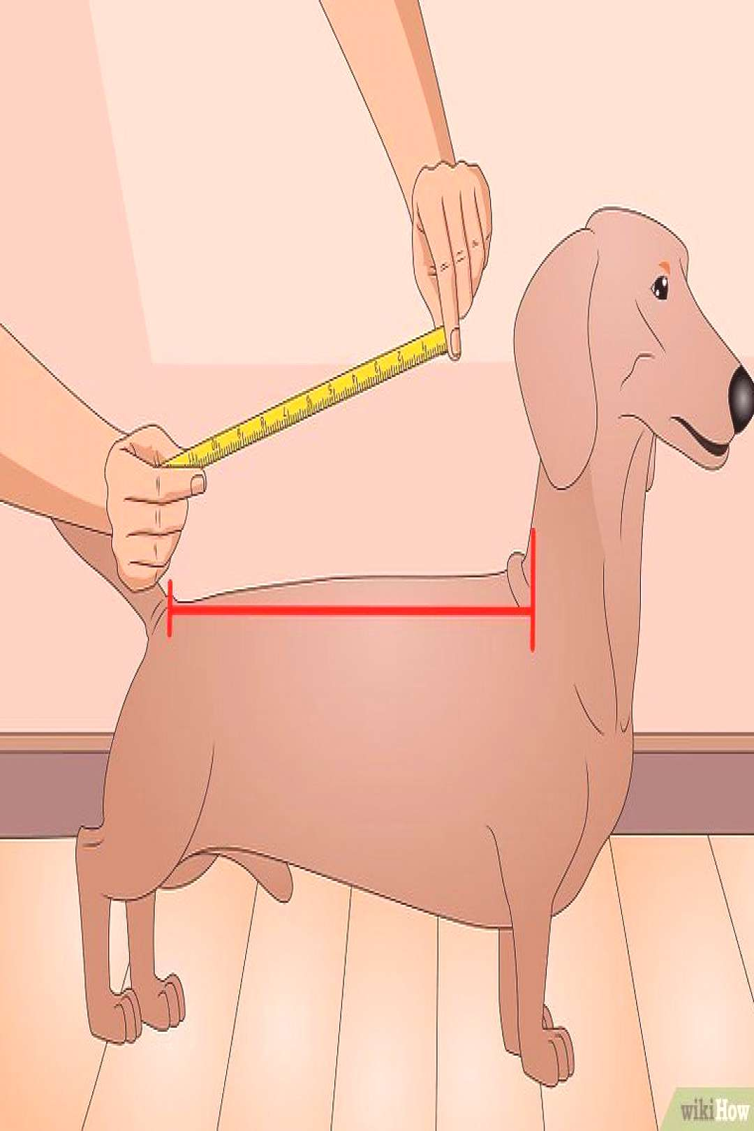 How to Make a Dog Coat (with Pictures) - wikiHow