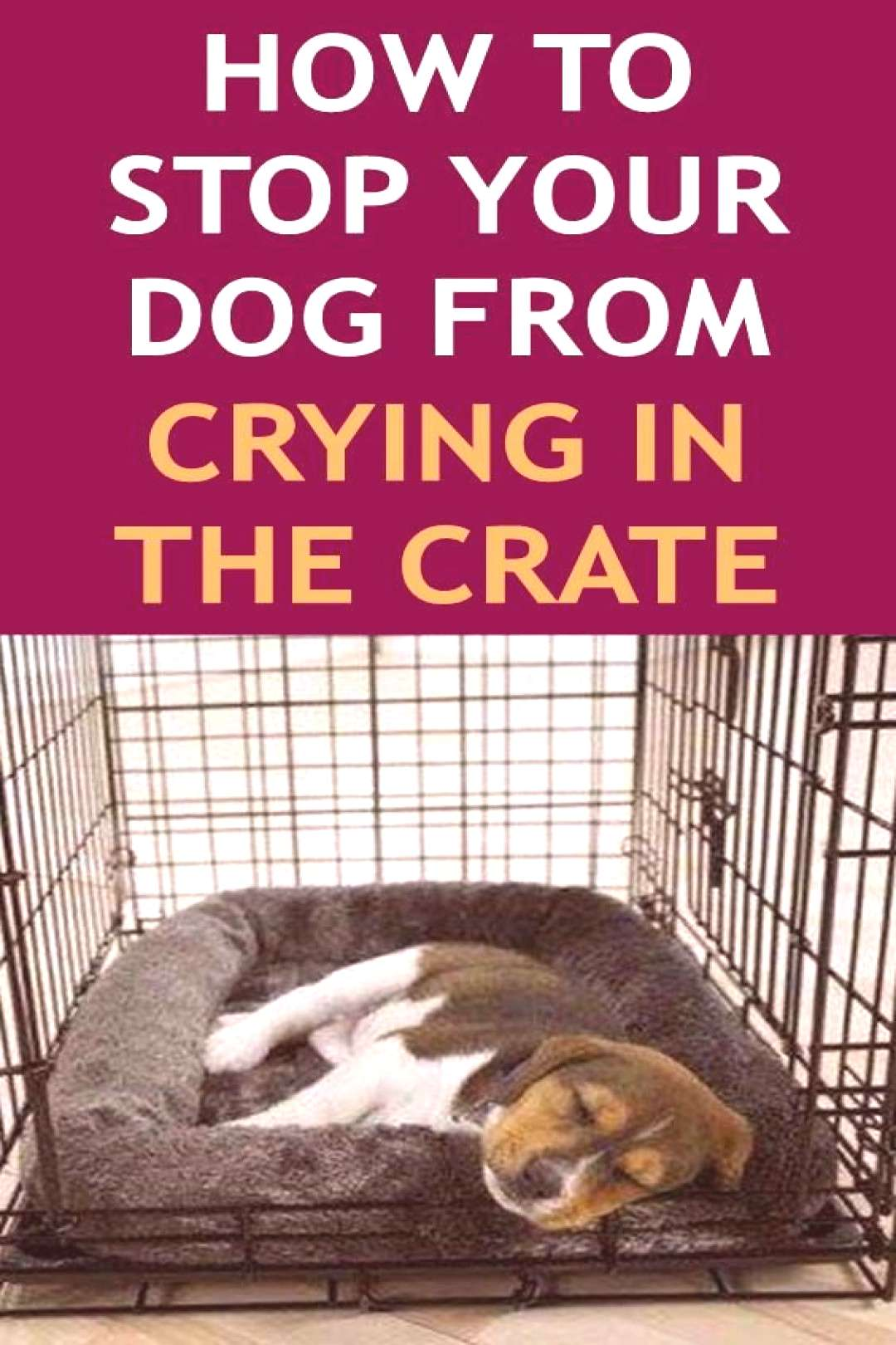 How to Stop Your Dog From Crying in the Crate (Crate Training 101) Wondering about how to crate tra