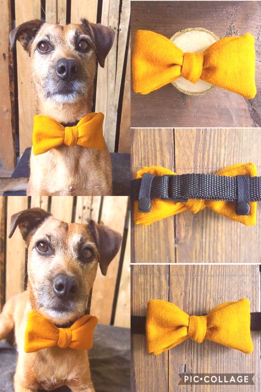 Mustard Yellow dog bow tie. A simple accessory for the hipster dog