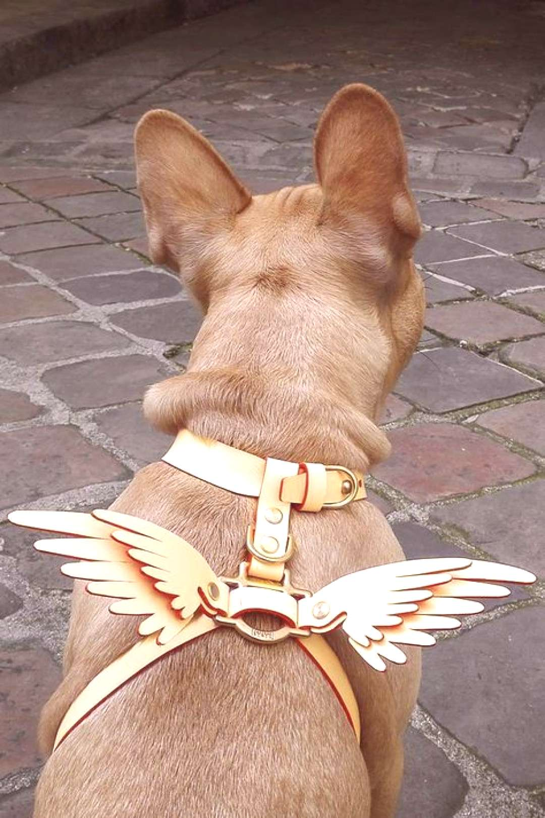 NIELS PEERAER - Wings leather dog harness - Tap the pin for the most adorable pawtastic fur baby ap
