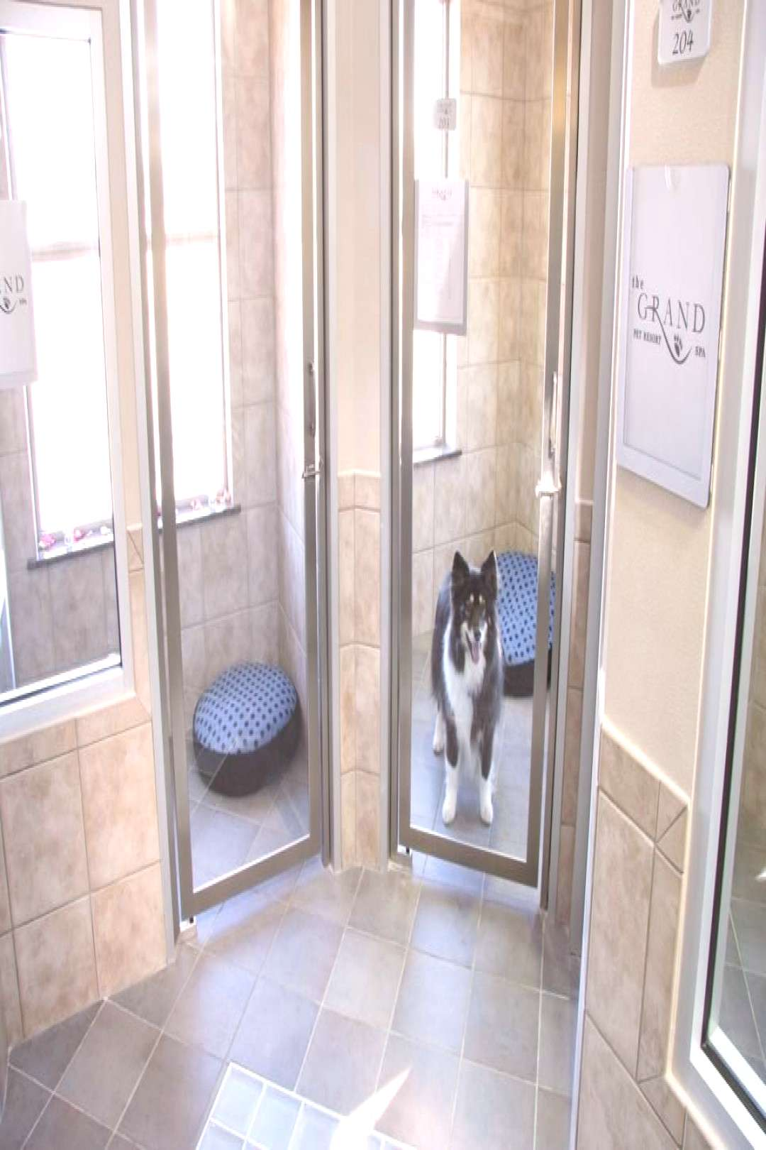 Pet Resorts Luxury Pet Boarding :  | Travel Channel