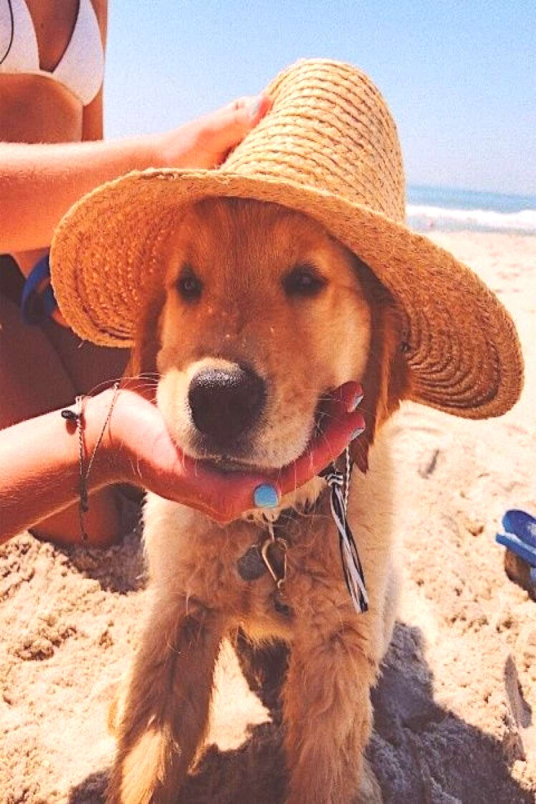 Pin on Puppies This Pin was discovered by Grace Margaret. Discover (and save!) your own Pins on Pin