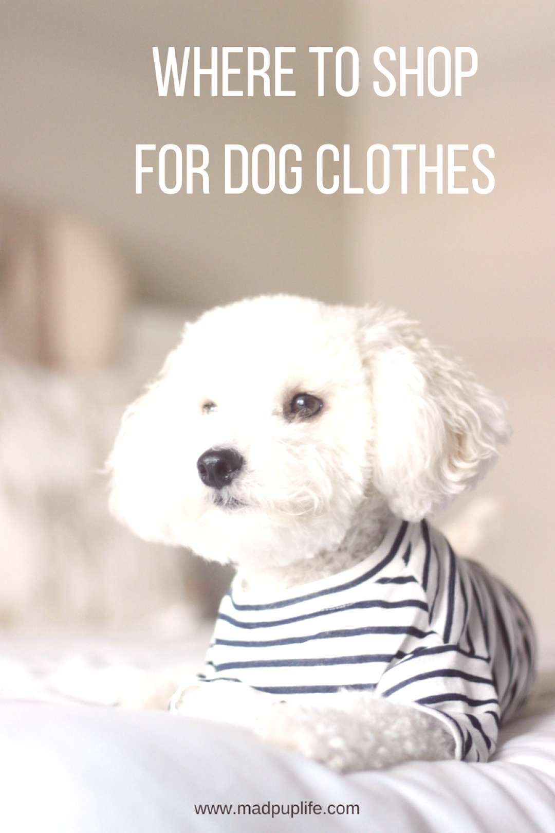 Searching for stylish and trendy dog clothing? Check out these Instagram famous dog shops!