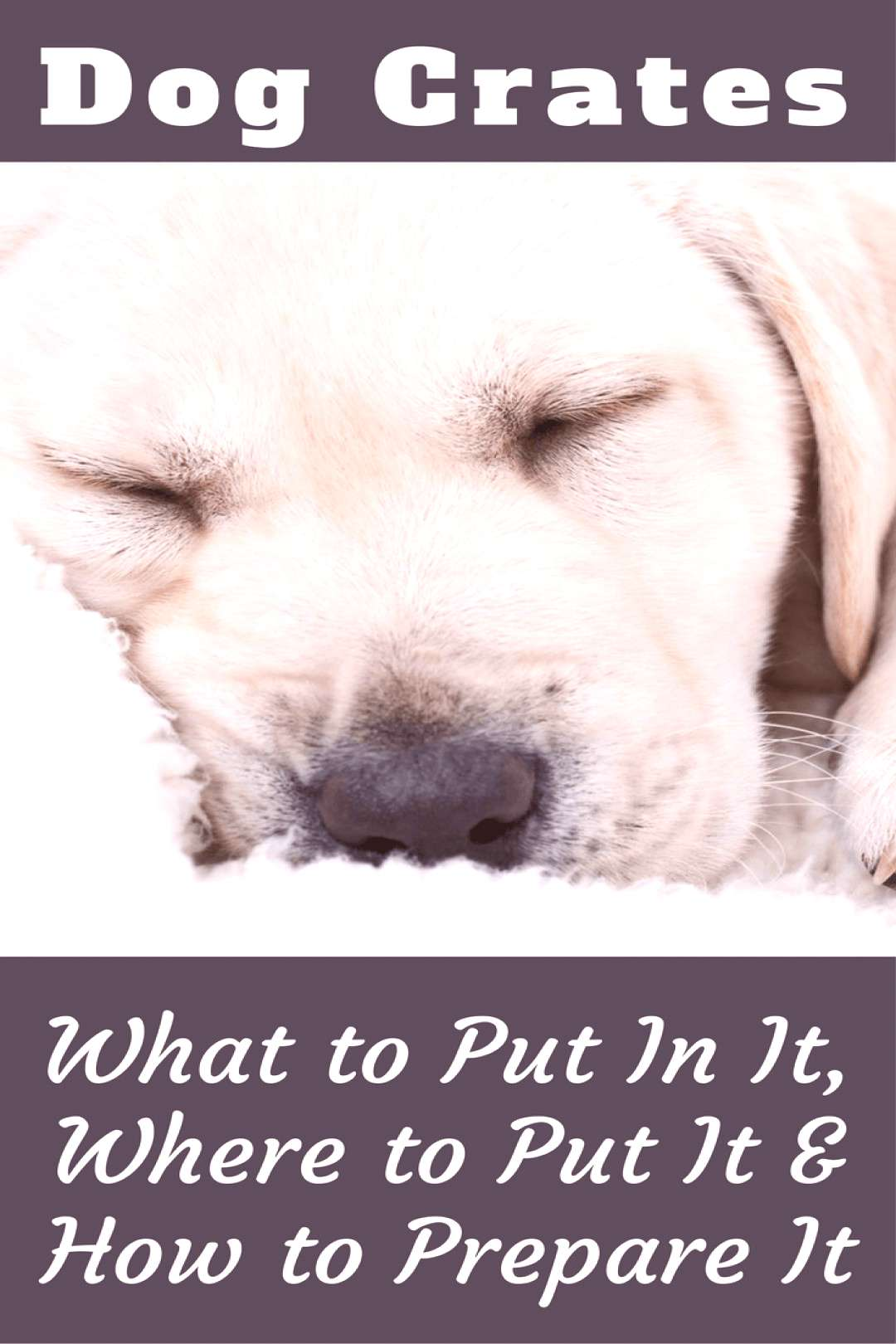 What to put in a dog crate, where to put it, how to get it prepared