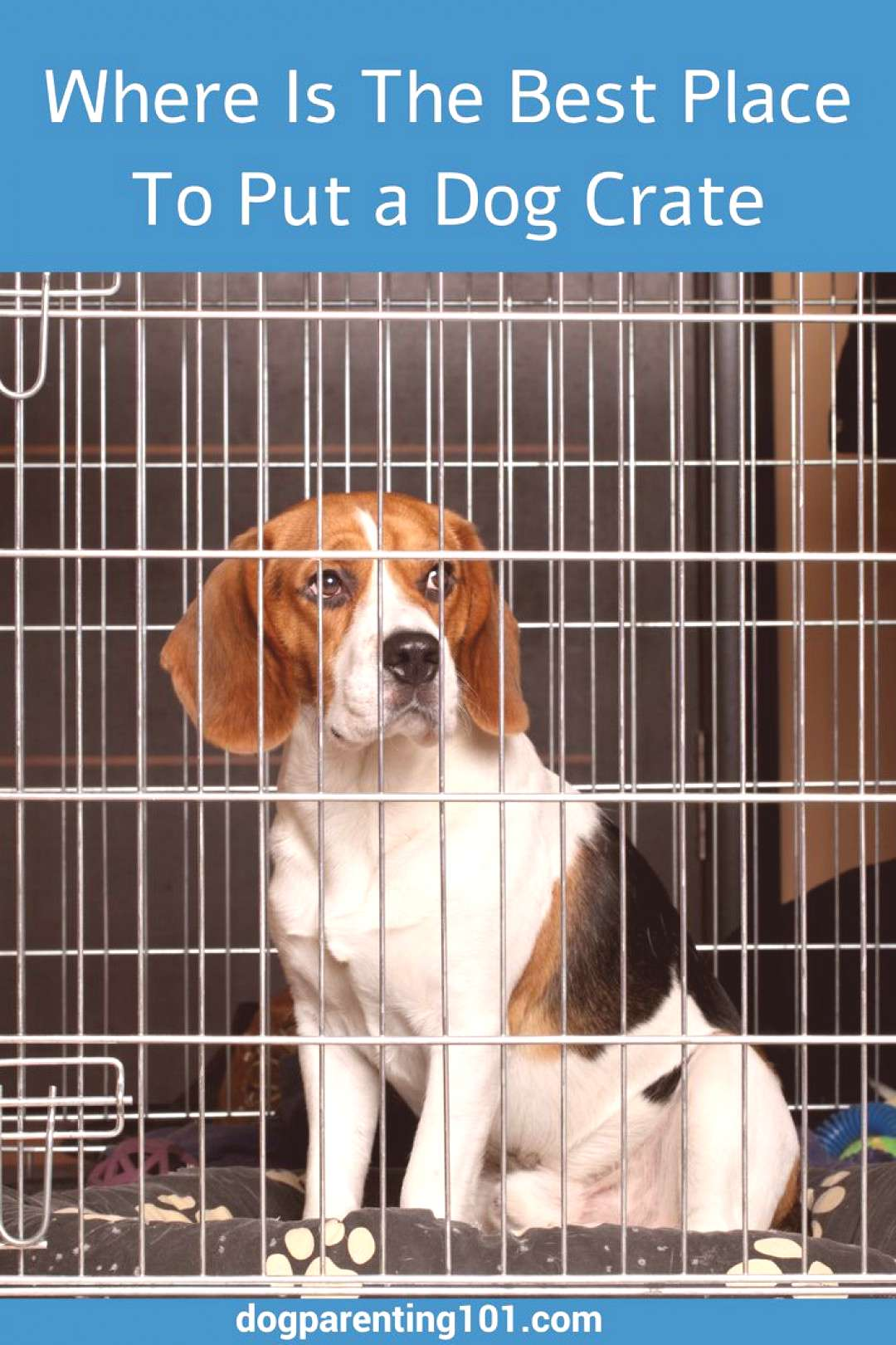 Where Is The Best Place To Put a Dog Crate | Dog Parenting 101